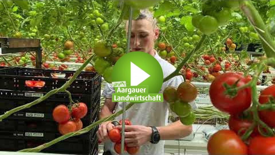 Embedded thumbnail for Von der Xitomatl zur perfekten Tomate