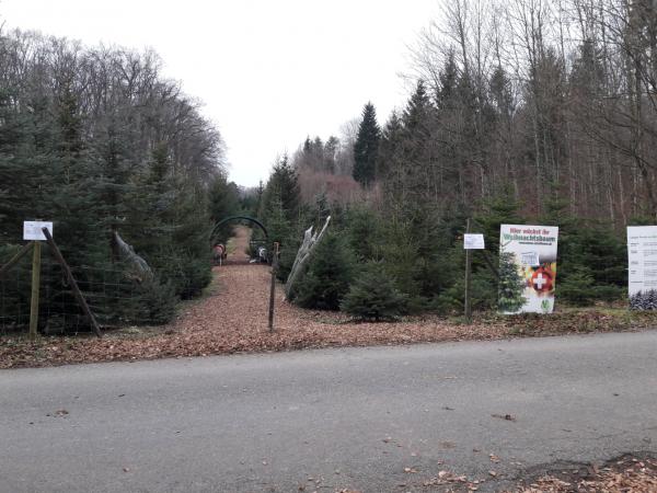 Weihnachtsbäume von Familie Killer