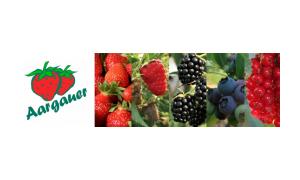 Verband Aargauer Beerenpflanzer